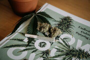 cannabis addiction, ganja, joint, kaveri irca